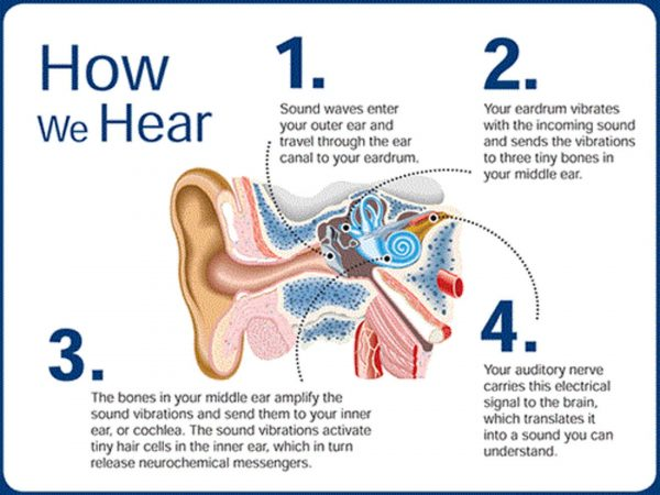 How Hearing Works?